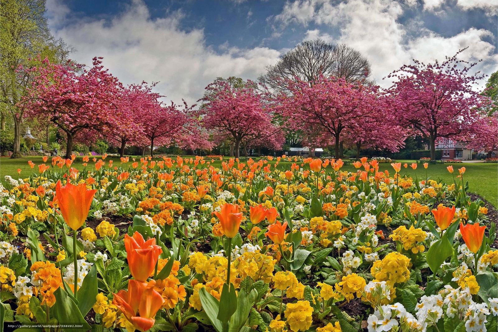 Tlcharger fond d 39 ecran jardin parterre de fleurs arbres for Parterre de fleurs