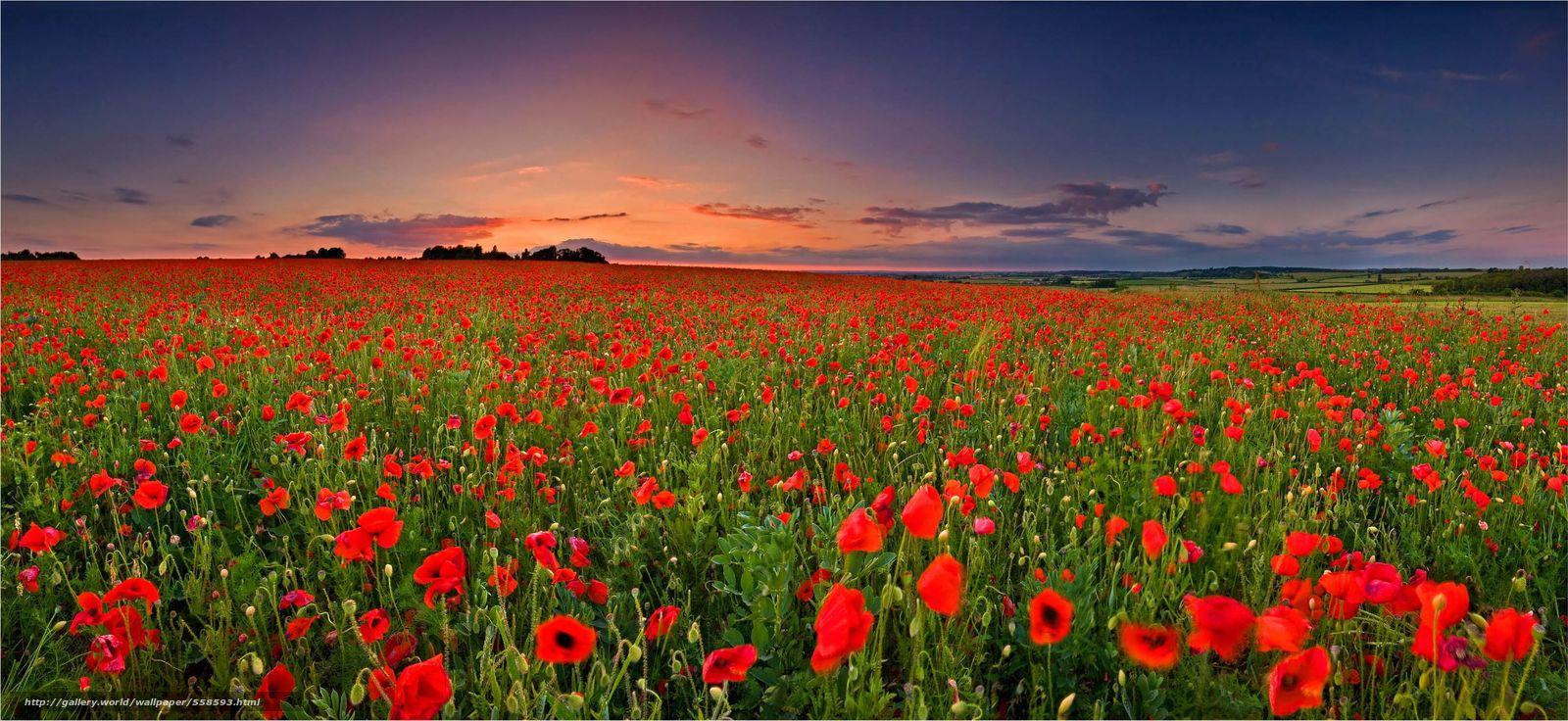 Tlcharger Fond d'ecran coucher du soleil,  domaine,  Fleurs,  paysage Fonds d'ecran gratuits pour votre rsolution du bureau 2781x1279 — image №558593