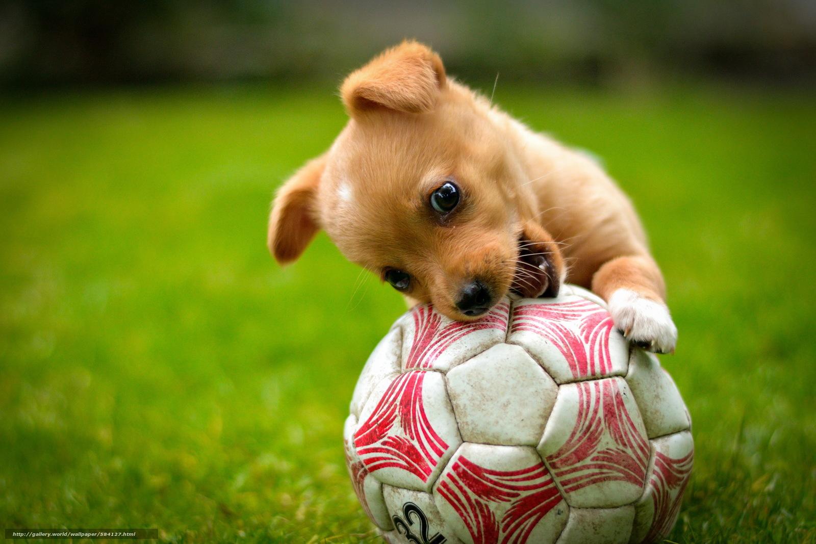 Hund spiel ball welpen red rasen