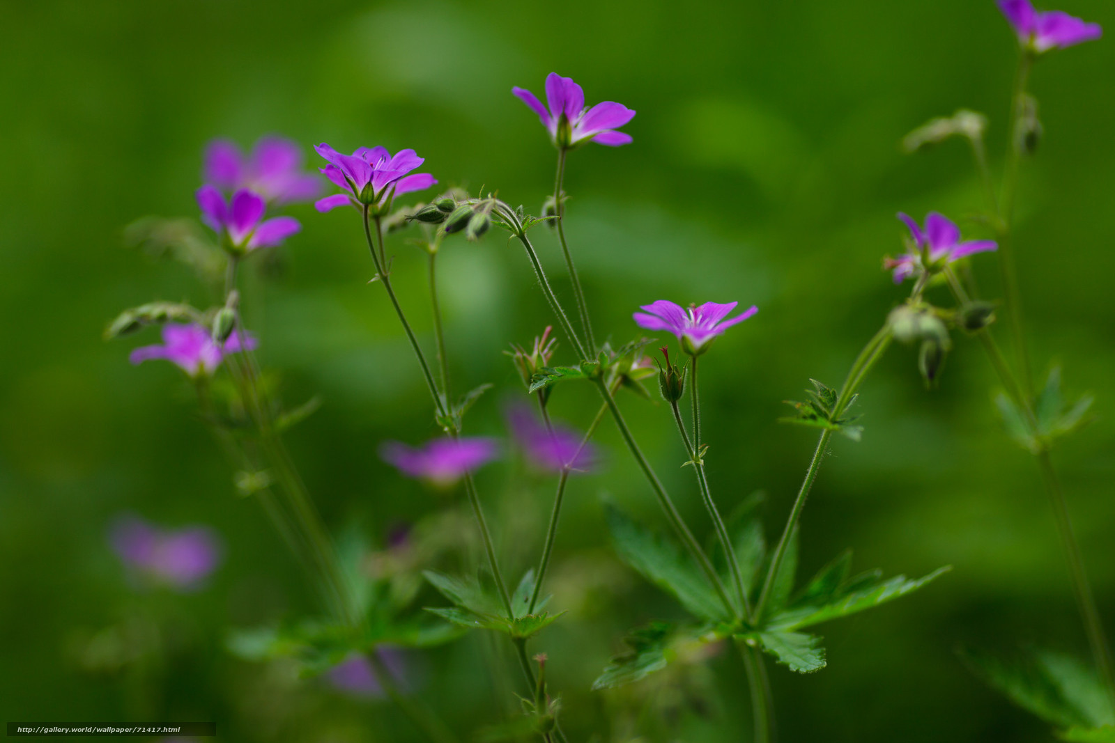 green purple summer background - photo #12