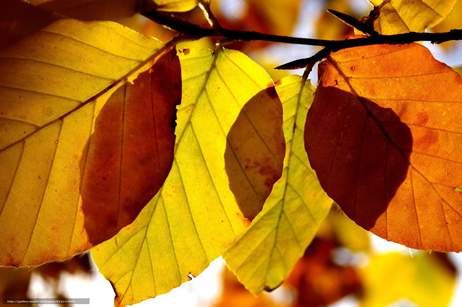 Baixar wallpaper outono wallpaper outono folhas macro papis de