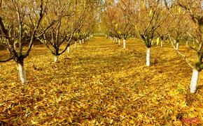 autumn, Garden, leaves, Trees
