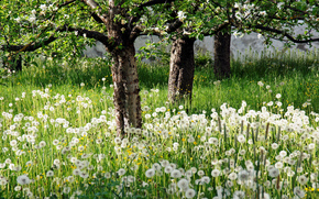 Календарь природы весна май