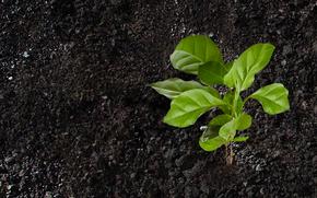Papel pintado verde suelo textura planta verde tierra for Tierra suelo wallpaper