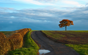 tree, landscape, field, road