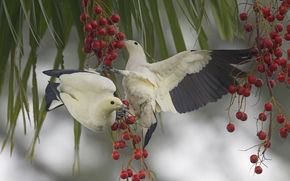 birds, BRANCH, BERRY, food