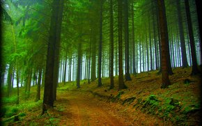 road, nature, trees, fog, forest