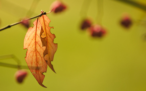 branch, background, autumn, foliage