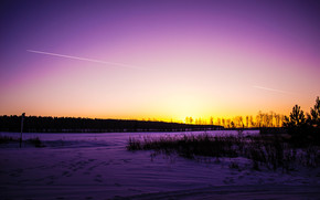 snow, trees, forest, road, sky, traces, winter, nature, beauty, grass, sunset