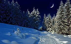 winter, evening, forest, nature