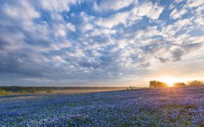 Texas, Ennis, Bluebonnet Sunrise