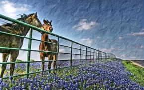 sky, clouds, horse, field