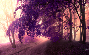 foliage, road, trees, purple, crown, forest