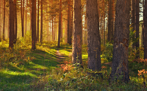 trees, grass, TRACK, forest, light, footpath