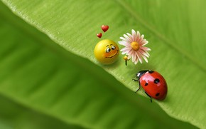art, 3d, ladybug