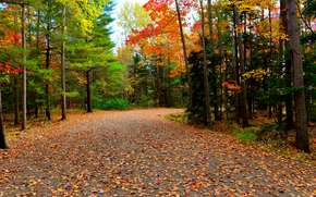 road, trees, autumn, forest, Acadia National Park, nature, landscape