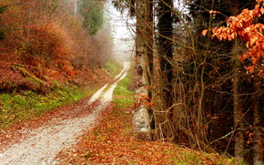 road, nature, trees, autumn