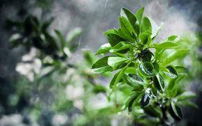 Macro, foliage, branch