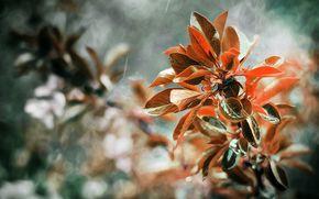 Macro, autumn, foliage, branch