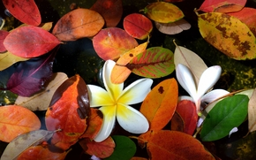 flowers, autumn, foliage, water