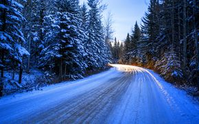 trees, landscape, road, winter