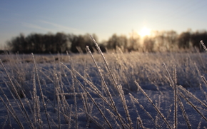 country, winter, RF, cold, Russia, snow, rise, sunset, ice, frost, light, forest, photographer, life, beauty, field, sky, grass, cleanliness