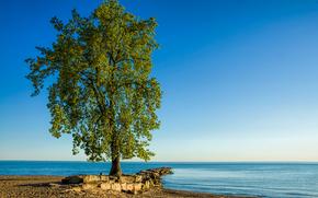 Lone Tree, Хантингтон-Бич, озеро Эри, дерево, пейзаж
