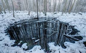 лес, зима, деревья, озеро, водоём, природа