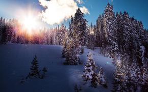 iarnă, soare, copaci, zăpadă, natură