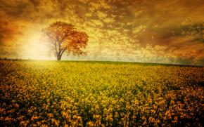 apus de soare, domeniu, copac, Flori, peisaj