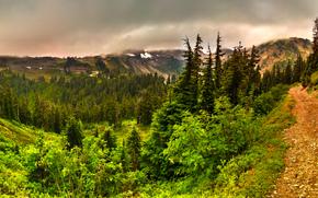 Munți, copaci, rutier, peisaj
