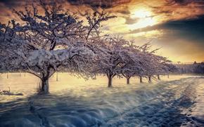 iarnă, apus de soare, copaci, rutier, zăpadă, peisaj