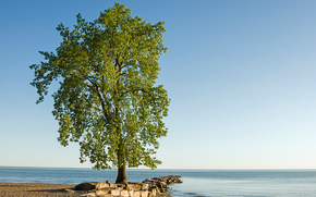 Lone Tree, Huntington Beach, Lago Erie, árbol, paisaje