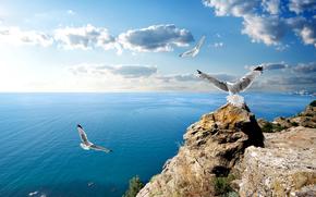 ussia, coast, sea, sky, seagull, Crimea, clouds, nature