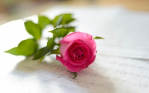 rose, musique, bokeh