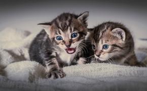Gatinhos, crianças, gêmeos