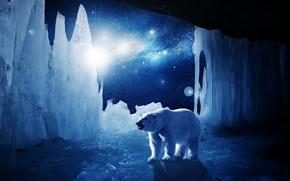 geleira, urso polar, luz