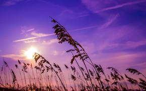 небо, рассвет, восход, камыш
