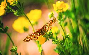 бабочка, цветы, макро, боке