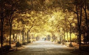 city, park, autumn, trees, people, road