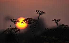 sky, sun, sunset, plant, silhouette