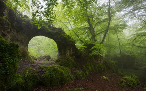forest, arch, foliage, moss, fog, nature