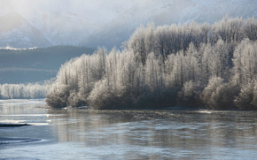 Chilkat River, Alaska, USA