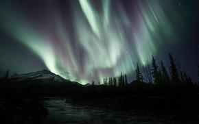 Aurora Borealis, Spruce, Brooks Range, North, Slope, Alaska, USA