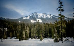 Mount Washington Slopes, British Columbia, Canada