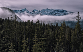 Comox-Strathcona Park, British Columbia, Canada