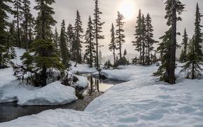 Small creak, Battleship lake, Strathcona Park, Vancouver Island, British Columbia, Canada