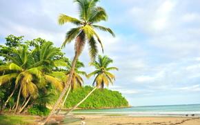 sea, shore, Palms, beach, landscape