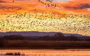 Bosque del Apache Wildlife Refuge, Râul Rio Grande, New Mexico, apus de soare, Gâște