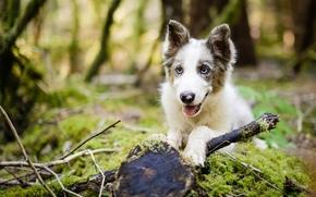 perro, cachorro, bosque